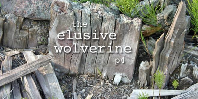 wolverine0d