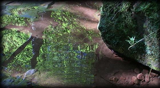 waterpic